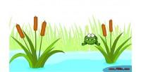 Frog jojo