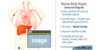 Human interactive diagram organs body