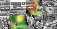 Imageboom jquery gallery grid html5
