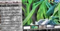 Full wordpress screen gallery